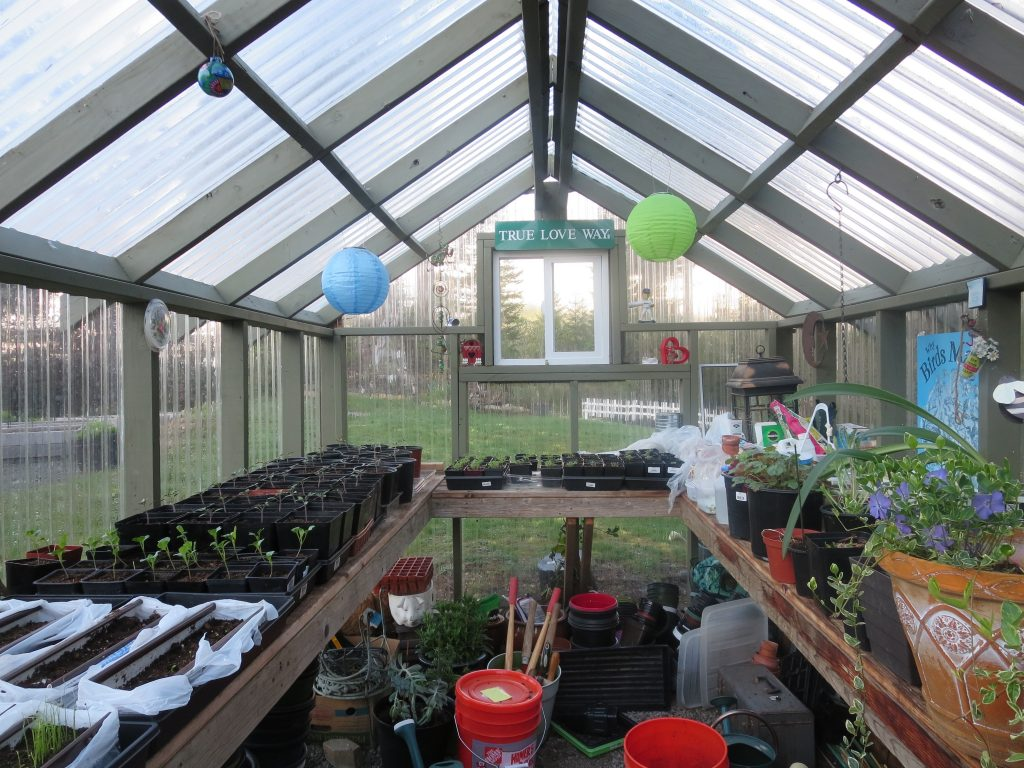 Greenhouse April 2017